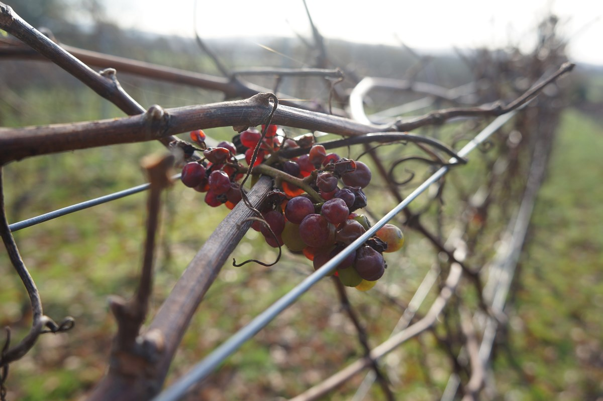 Winter Pruning and Planning